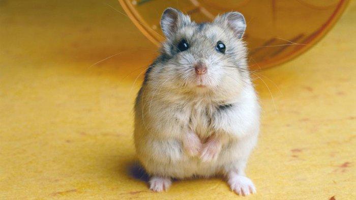 7 Bahasa Tubuh Hewan Peliharaan yang Harus Diketahui, Begini Tingkah Kelinci & Hamster saat Takut